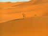 MAROC - dune