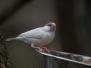 Jean-Pierre : oiseaux