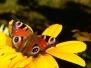 Michèle : Fleurs et petits animaux